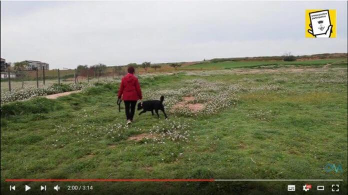 Espai de socialització de gossos a Santpedor