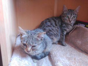 Gats que viuen en casa d'acollida