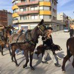 Cavalls tibant carruatges vora la plaça de la Pau a la Festa dels Tres Tombs de Sant Antoni de Santpedor FOTO: AJ. SANTPEDOR