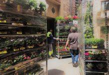 Preparatius Santpedor en Flor FOTO: AJUNTAMENT DE SANTPEDOR
